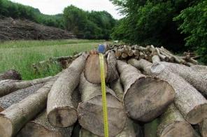 eszteregnye fakivágás.2