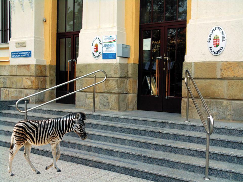 nagykanizsa városháza zebra