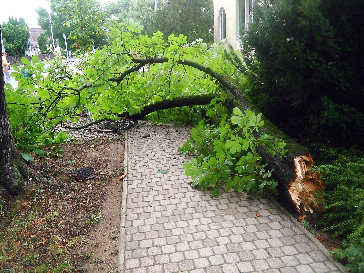 kidőlt fa nagykanizsa 1
