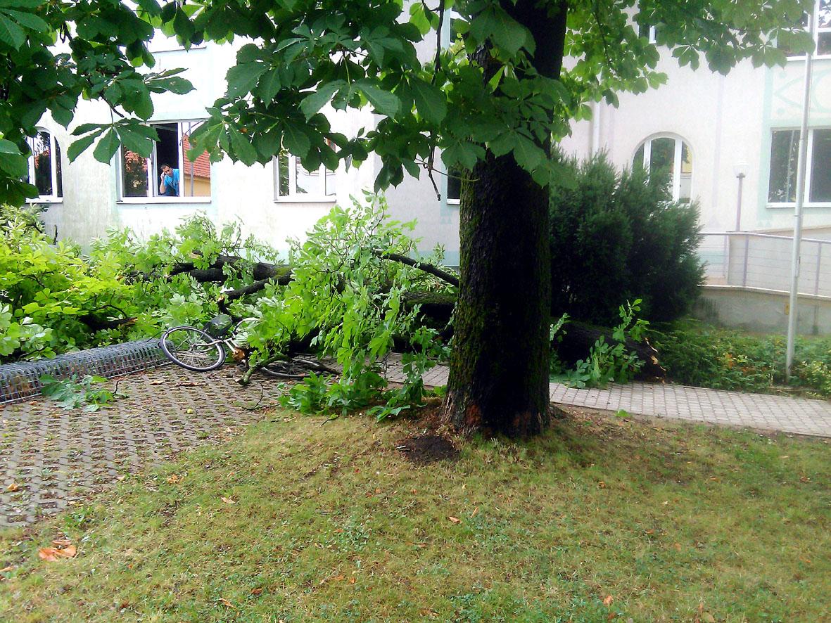 kidőlt fa nagykanizsa 2